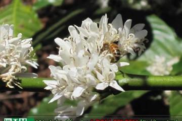 Bị dị ứng có dùng được phấn hoa không?