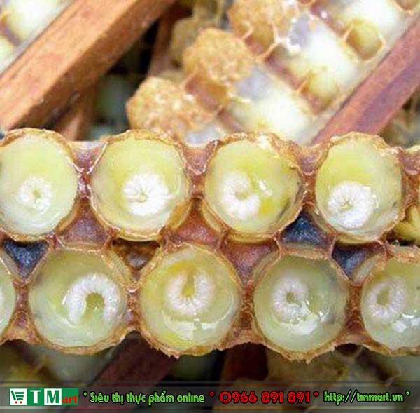 Mũ làm sữa ong chúa tươi nguyên chất