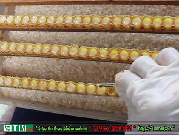 Cơ sở khai thác sữa ong chúa TM mart