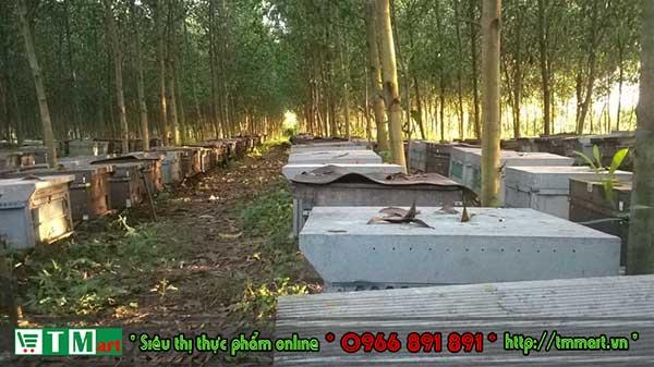 Trang trại ong TM mart tại Lâm Đồng
