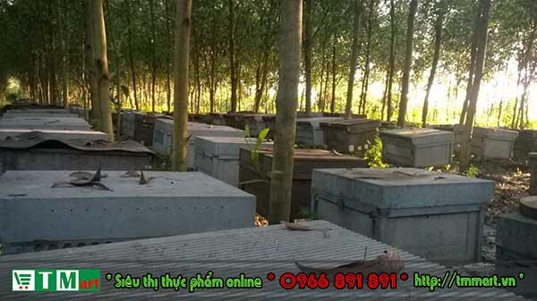 Vườn nuôi ong TM mart tại Lâm Đồng