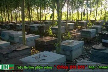 TM mart – Đơn vị cung cấp sữa ong chúa chính hãng tại Hà Nội